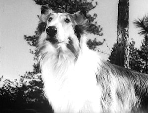 Lassie and Timmy #4