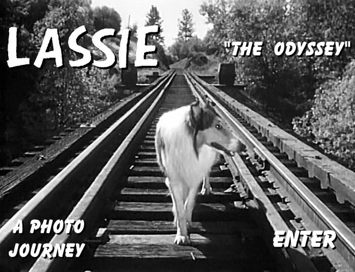 Lassie's Odyssey: A Photo Journey Entrance Screen