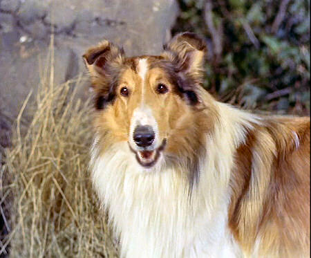 Lassie Web Episode Guide Season 1